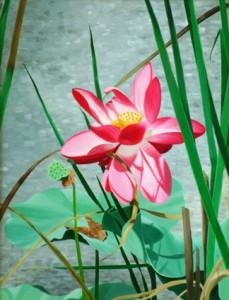 lotuspnd